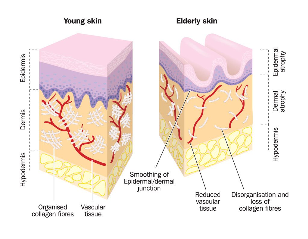 Nonsurgical Facial Cosmetic Procedures for aging skin